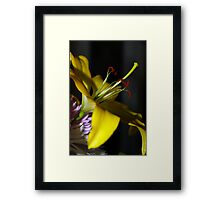 Edmonton Lily Framed Print