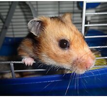 Blu Fondue, the beatnik hamster by EXPL-abomb-ODES