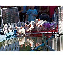 Racing Piglets Photographic Print