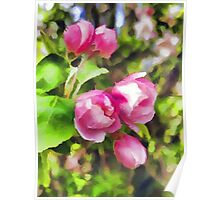 Pink Blossoms of Spring Poster