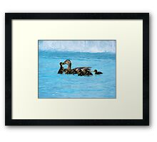 Kissing Ducks Framed Print