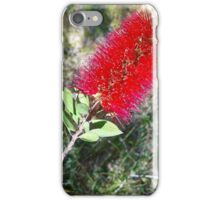 Bottle-Brush (Callistemon citrinus) iPhone Case/Skin