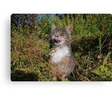 Tabby cat licking lips in garden Canvas Print