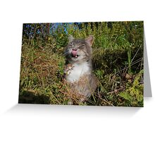 Tabby cat licking lips in garden Greeting Card