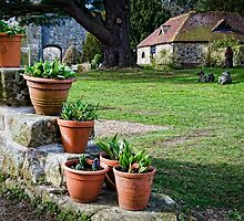 Potted Plants by Sue Martin