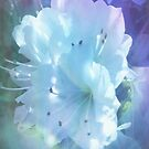 Colorful  Whispers of White Azaleas by Charldia