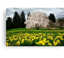 The Colors of Spring Canvas Print