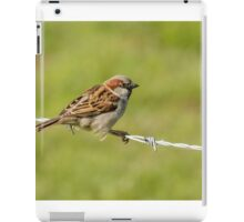 Male House Sparrow (Passer domesticus) iPad Case/Skin