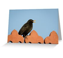 Male Blackbird (Turdus merula) singing Greeting Card
