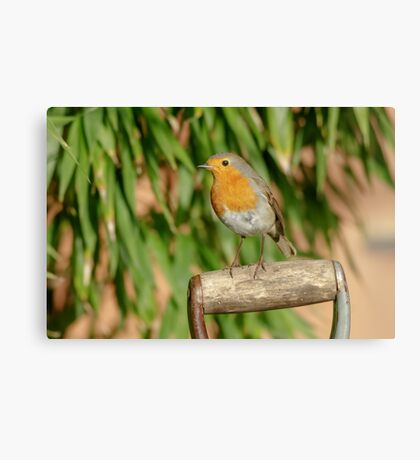 European Robin (Erithacus rubecula) on garden spade Canvas Print