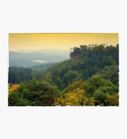palatinate forest Photographic Print