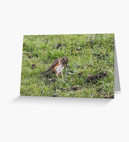 Redwing (Turdus iliacus) with earthworm Greeting Card