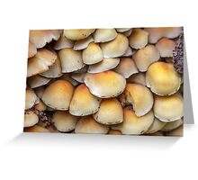 Sulphur Tuft mushrooms (Hypholoma fasciculare) Greeting Card