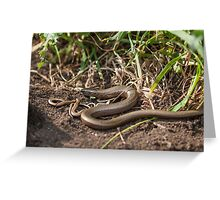 Adult Slowworm (Anguis fragilis) with young babies among dirt and scrub Greeting Card