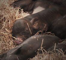 Sweet Dreams Little Piglets by lemurnade