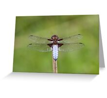 Male Broad-bodied Chaser (Libellula depressa) Greeting Card