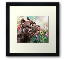 American Staffordshire Terrier Painting  Framed Print