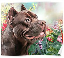 American Staffordshire Terrier Painting  Poster