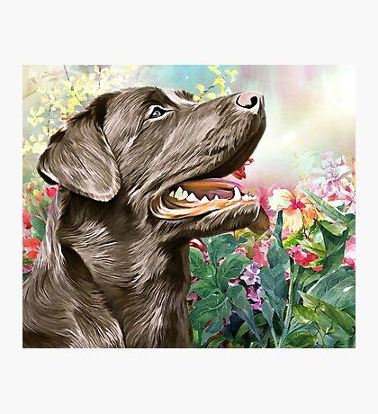 Labrador Painting  Photographic Print