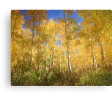 Colorado Aspens in September Canvas Print
