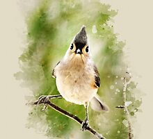 Tufted Titmouse Watercolor Art by Christina Rollo