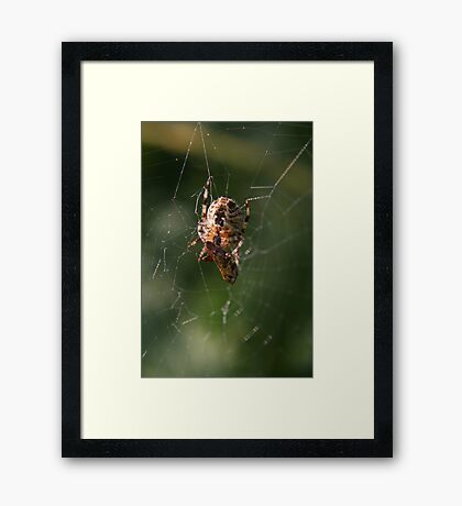 Successful Spider Framed Print