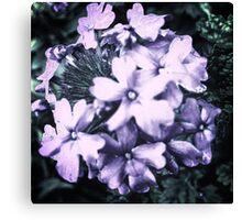 Frosty Flower Canvas Print