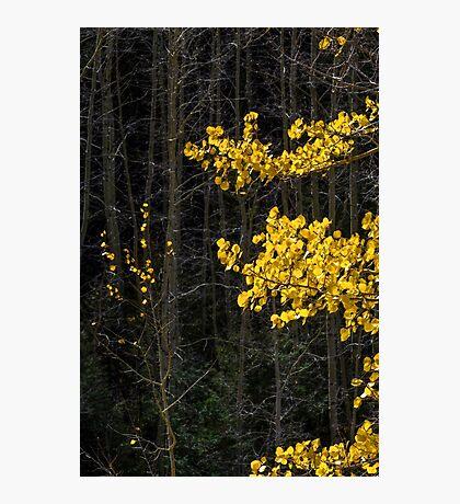 Gold On Dark Photographic Print