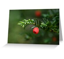 Close-up of Yew Tree (Taxus baccata) berries Greeting Card