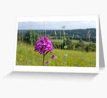 Pyramidal Orchid (Anacamptis pyramidalis) on chalkhill downs Greeting Card