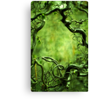Curly tree branches  Canvas Print