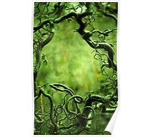 Curly tree branches  Poster