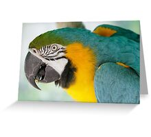 Blue-and-yellow macaw (Ara ararauna) Greeting Card