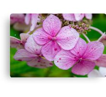 Purple Burst! Canvas Print