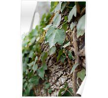 Elf Leaf Poster