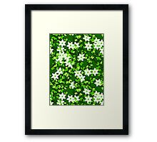 White Jasmine Among Green Leaves Framed Print