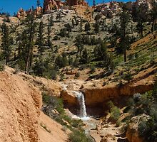 Mossy Cave Trail - Bryce Canyon National Park, Utah by dandeamer