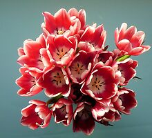 Tulips by Woodie