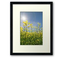 Sun Halo Over The Canola Framed Print