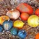 Multicolors by Nadya Johnson