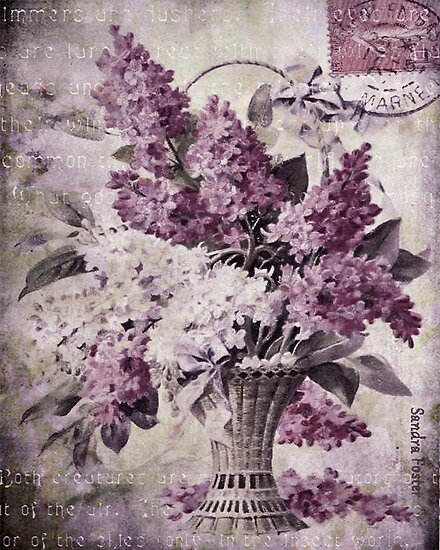 Lilacs Of Yesteryear by Sandra Foster