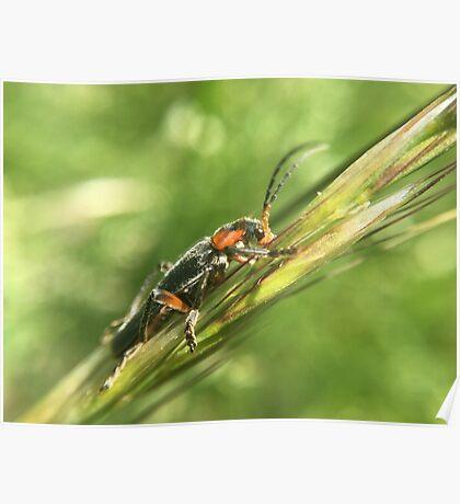 Tribu d'insectes profitant du soleil - Photo n°2 Poster