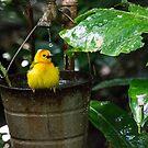 Birdbath by Mark Fendrick