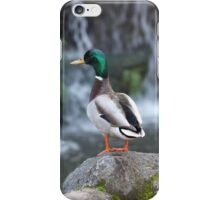 Duck Pond iPhone Case/Skin