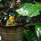 Birdbath 2 by Mark Fendrick