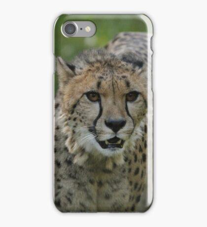 Cheetahs rest iPhone Case/Skin