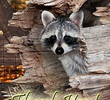 Thank You Raccoon by Wild For Ever