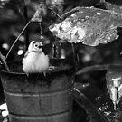 Birdbath (Black and White) by Mark Fendrick