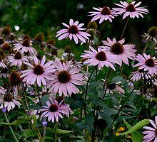Summer Flowers Theme 4 by Leosymon