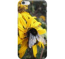 Beautiful Bumble Bee iPhone Case/Skin